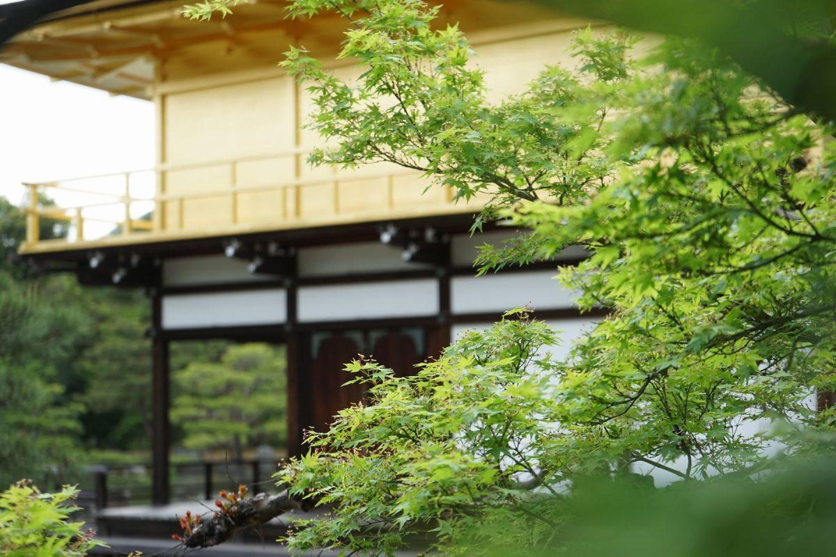 <新緑も美しい相国寺の山外塔頭>(著者撮影)