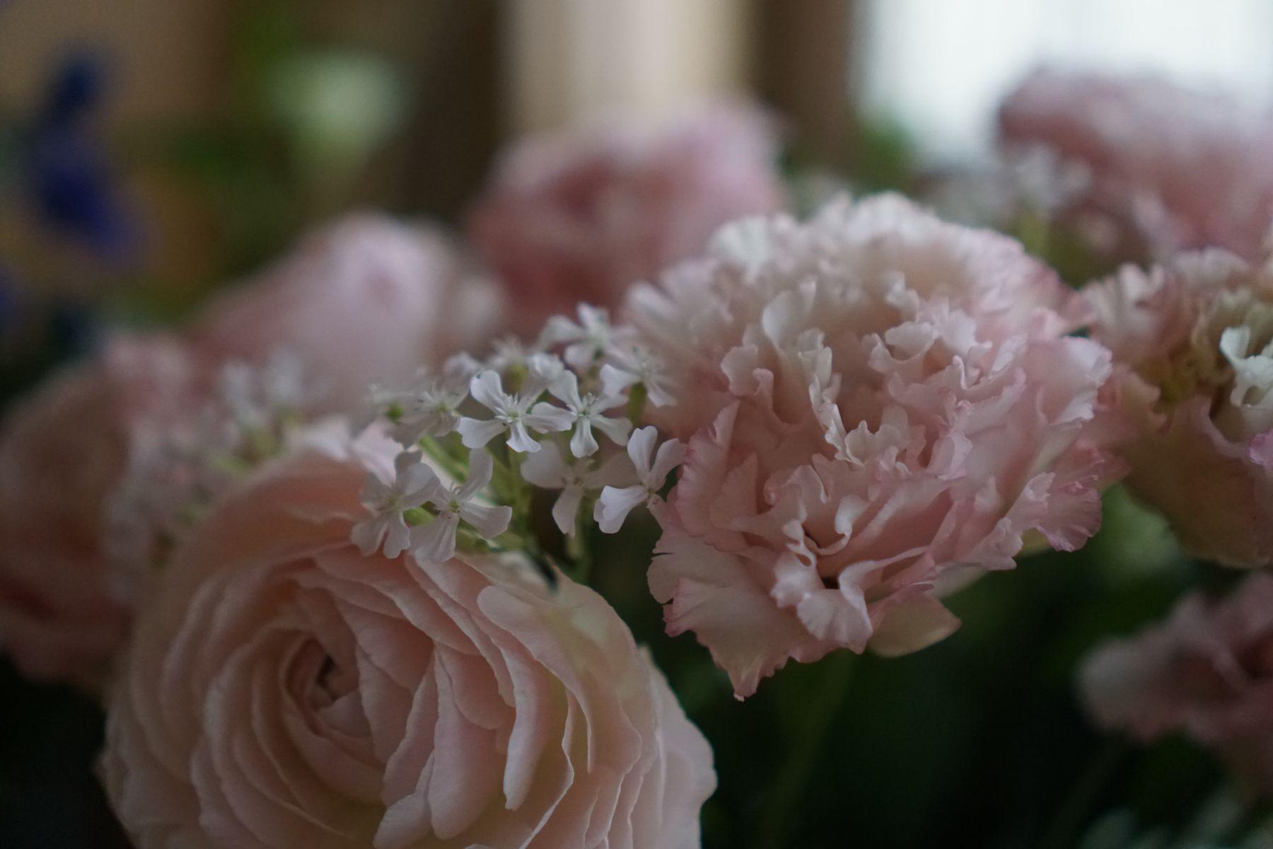 微妙なグラデーションがすてきな花々